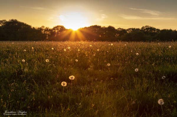 Užij si život – fstival vědomého bytí